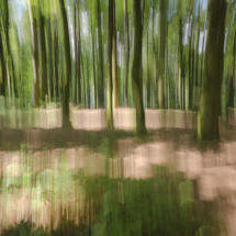 Abstraction foretstière
